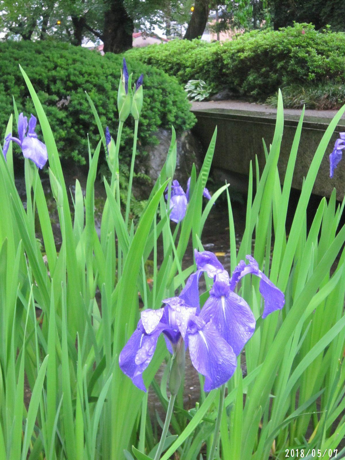 緑まばゆい季節となりました☆(5月10日追記あり) _a0207574_09123586.jpg