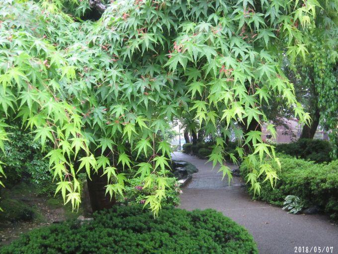 緑まばゆい季節となりました☆(5月10日追記あり) _a0207574_09383442.jpg