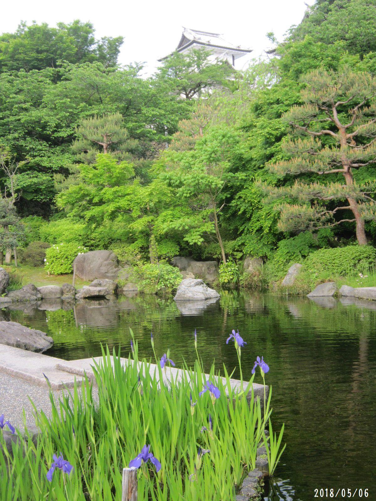 緑まばゆい季節となりました☆(5月10日追記あり) _a0207574_15514872.jpg