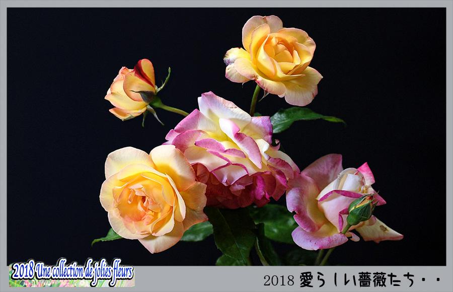 c0009981_16290811.jpg