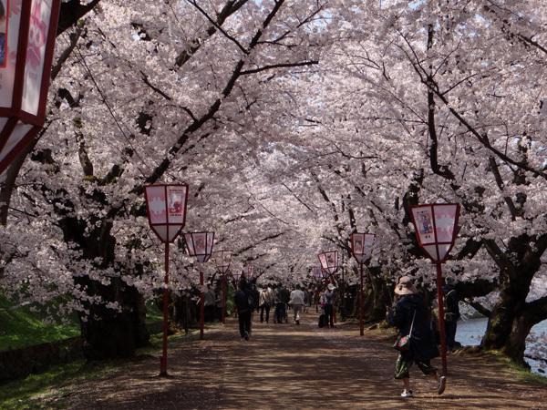 遅くなったけど(^^; 桜のトンネル弘前公園西堀ほかいろいろ^^_a0136293_19104983.jpg