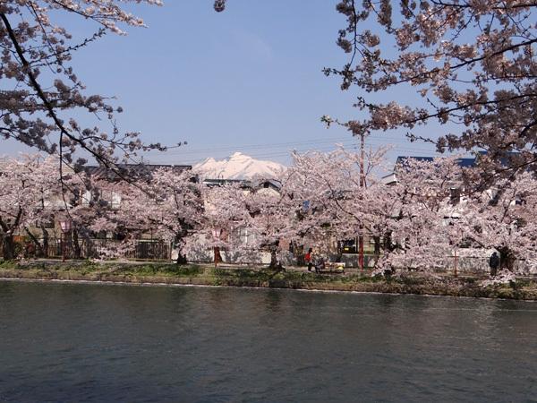遅くなったけど(^^; 桜のトンネル弘前公園西堀ほかいろいろ^^_a0136293_19110804.jpg