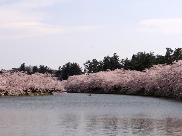 遅くなったけど(^^; 桜のトンネル弘前公園西堀ほかいろいろ^^_a0136293_19131731.jpg
