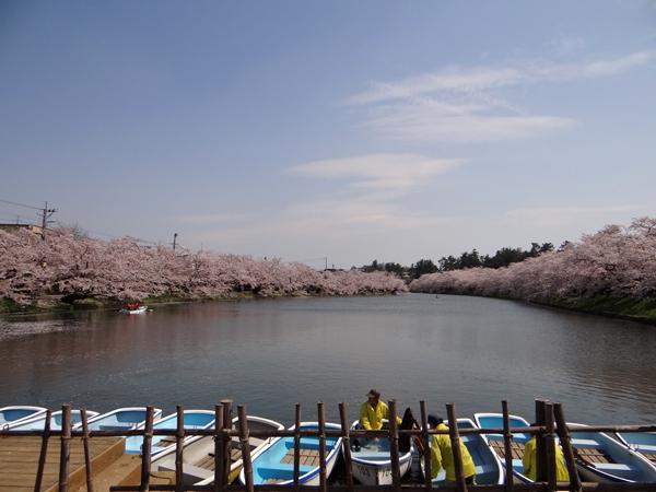 遅くなったけど(^^; 桜のトンネル弘前公園西堀ほかいろいろ^^_a0136293_19141664.jpg