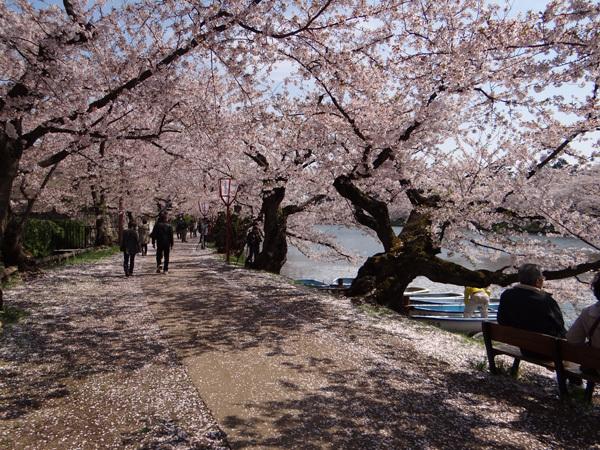 遅くなったけど(^^; 桜のトンネル弘前公園西堀ほかいろいろ^^_a0136293_19144264.jpg
