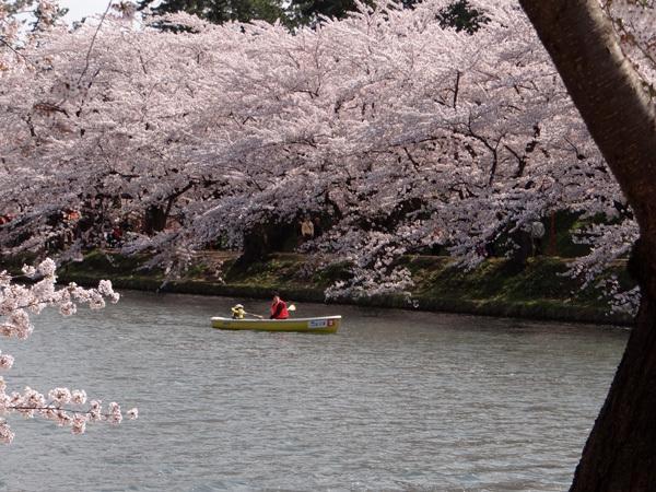 遅くなったけど(^^; 桜のトンネル弘前公園西堀ほかいろいろ^^_a0136293_19172751.jpg