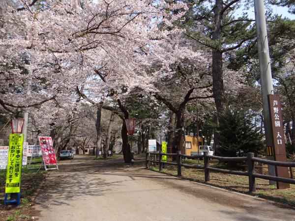 遅くなったけど(^^; 桜のトンネル弘前公園西堀ほかいろいろ^^_a0136293_19195758.jpg