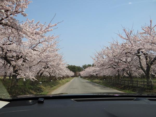 遅くなったけど(^^; 桜のトンネル弘前公園西堀ほかいろいろ^^_a0136293_19245967.jpg