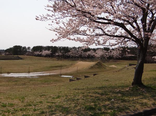 遅くなったけど(^^; 桜のトンネル弘前公園西堀ほかいろいろ^^_a0136293_19254768.jpg