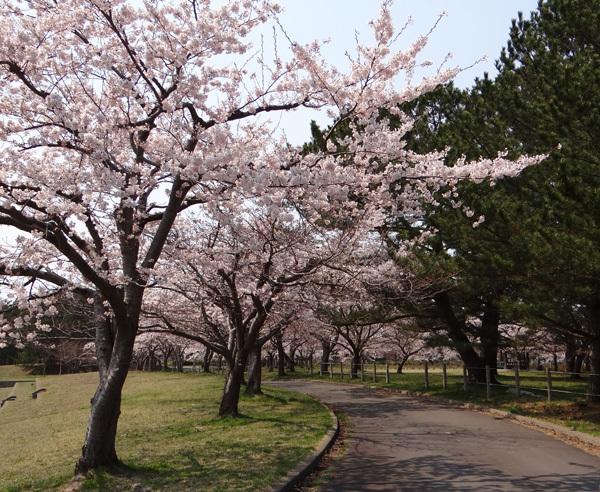 遅くなったけど(^^; 桜のトンネル弘前公園西堀ほかいろいろ^^_a0136293_19263769.jpg