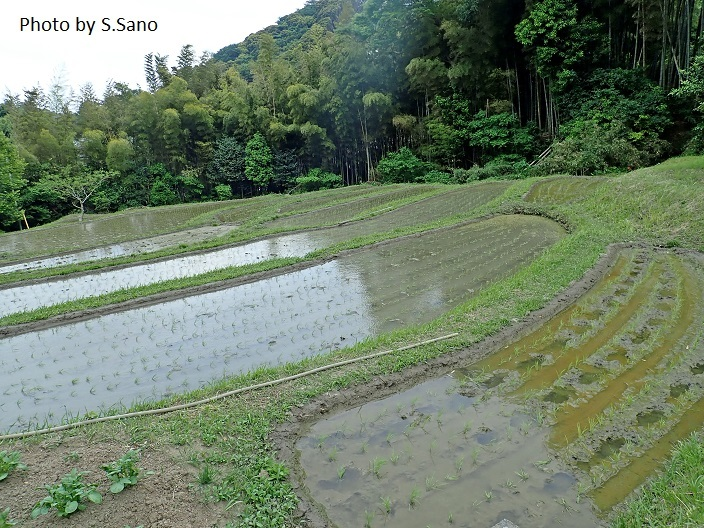 三浦半島の里山(2018年5月初旬)_b0348205_00100004.jpg