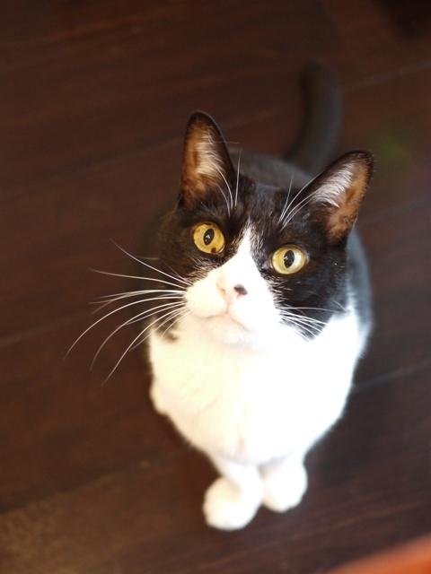猫のお留守番 ピケちゃん編。_a0143140_20151761.jpg