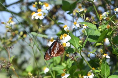 与論島の蝶たち_d0285540_20401608.jpg
