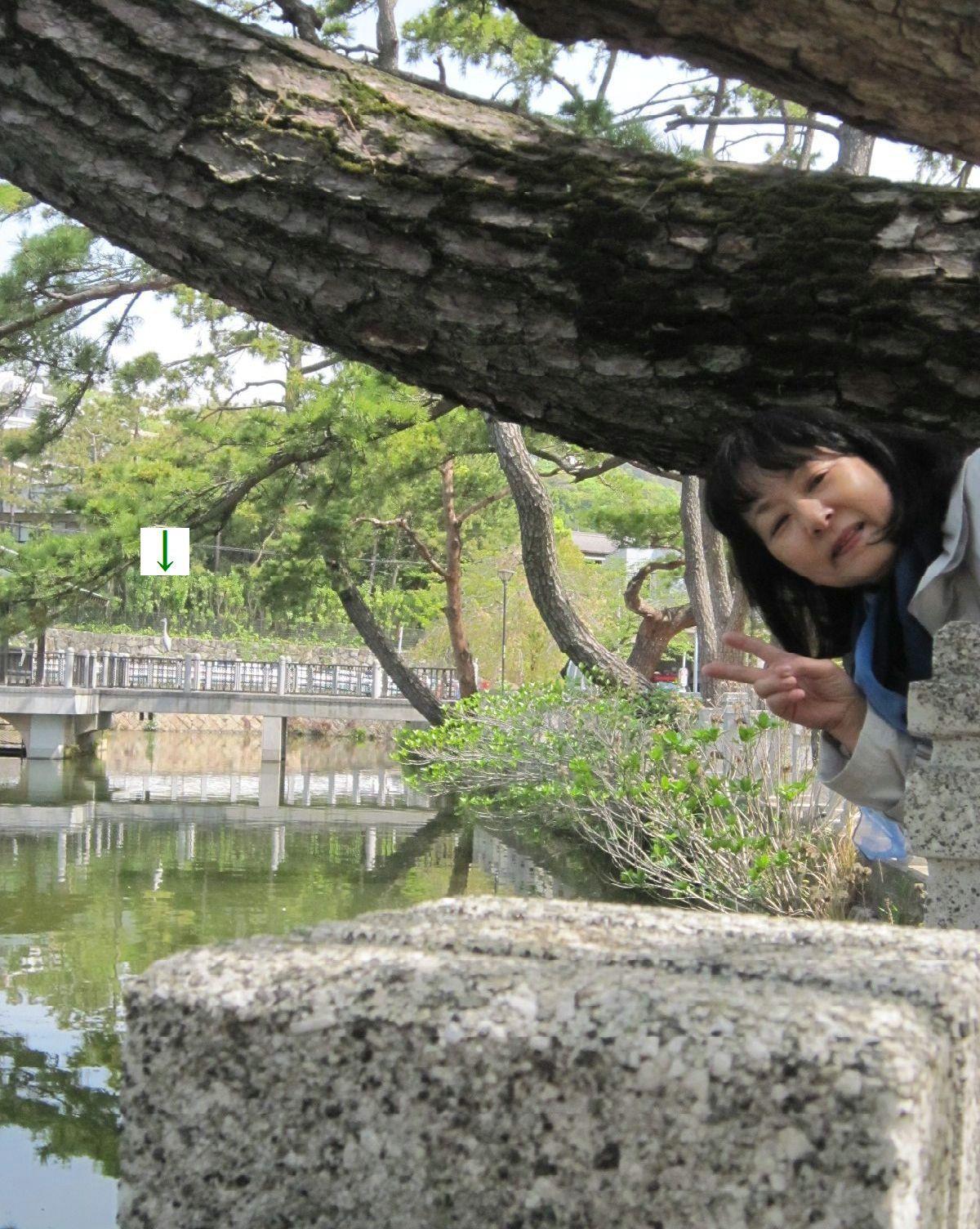 緑まばゆい季節となりました☆(5月10日追記あり) _a0207574_08004194.jpg