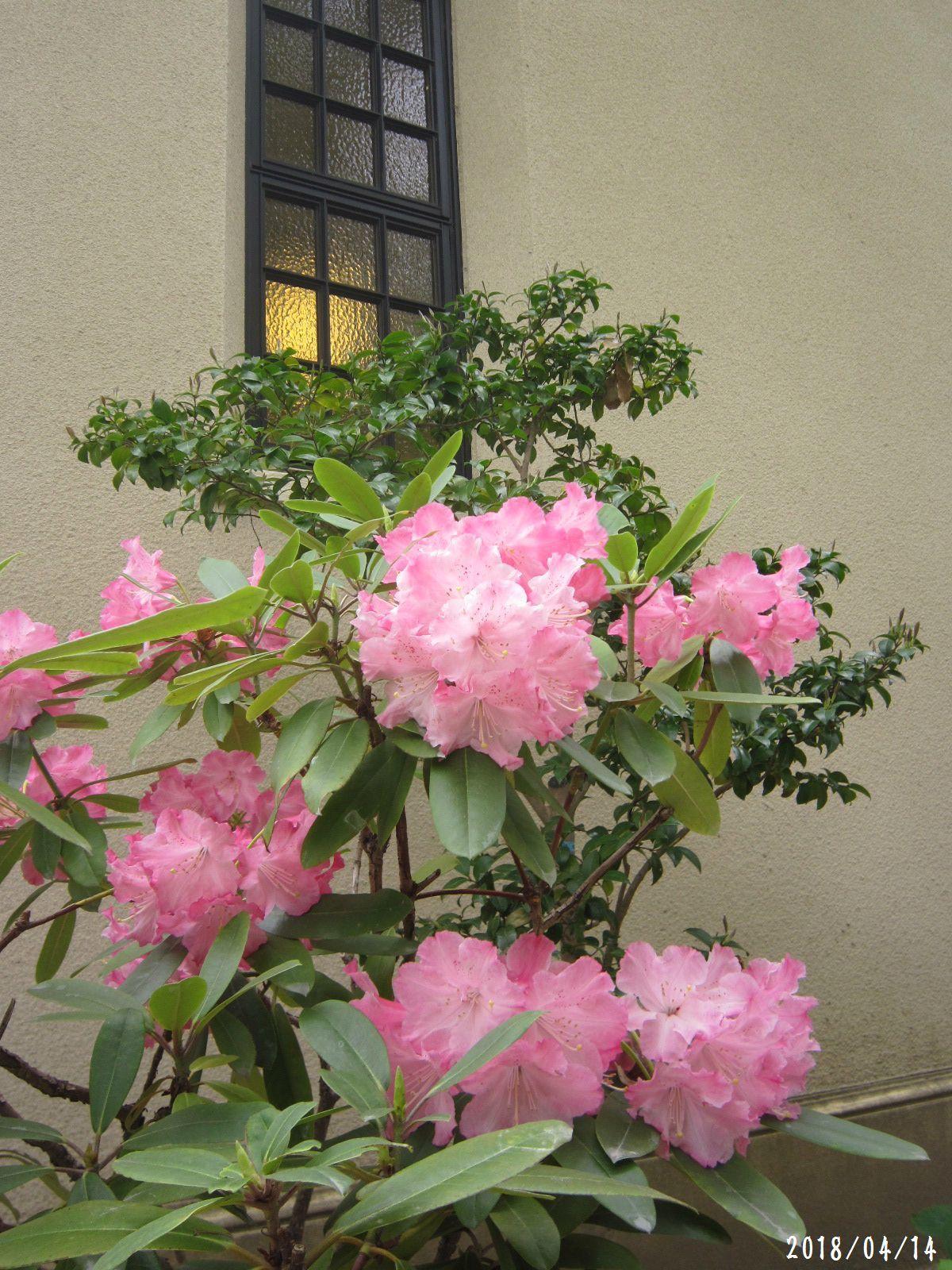 緑まばゆい季節となりました☆(5月10日追記あり) _a0207574_08174698.jpg