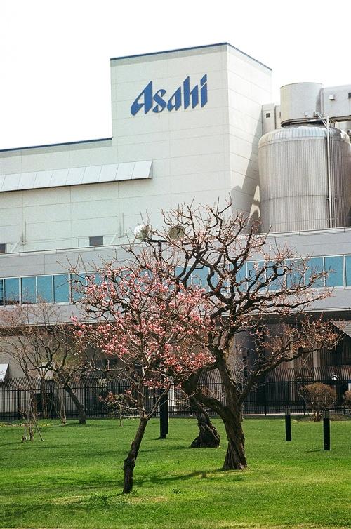 アサヒビール園の梅花とラム肩ロース_c0182775_16521120.jpg