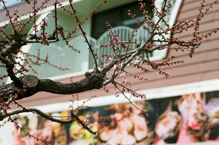 アサヒビール園の梅花とラム肩ロース_c0182775_165691.jpg