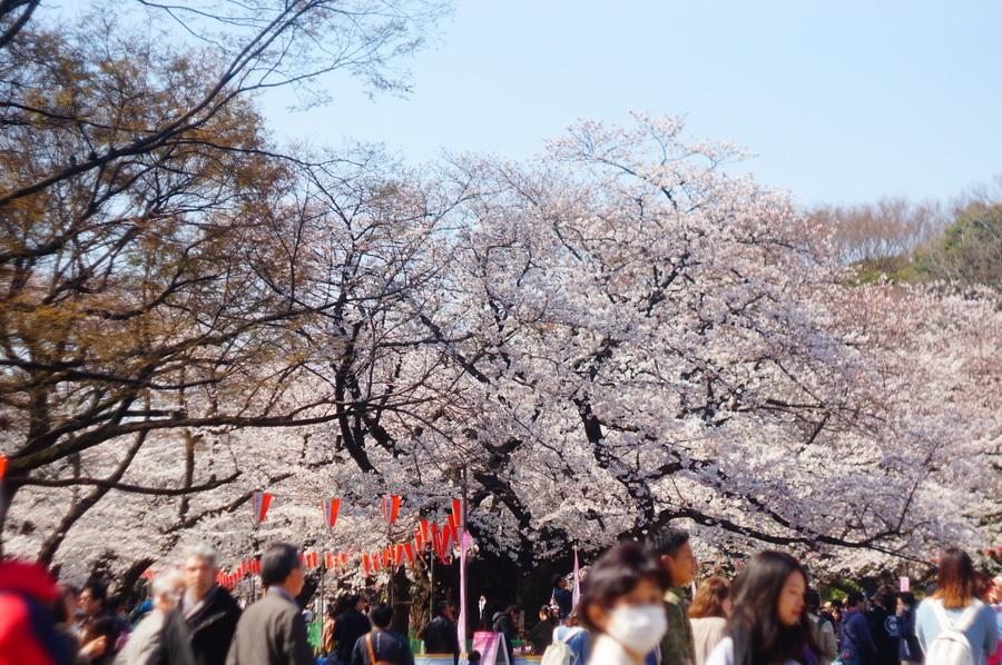 上野から郡山へ_c0180686_19013432.jpg