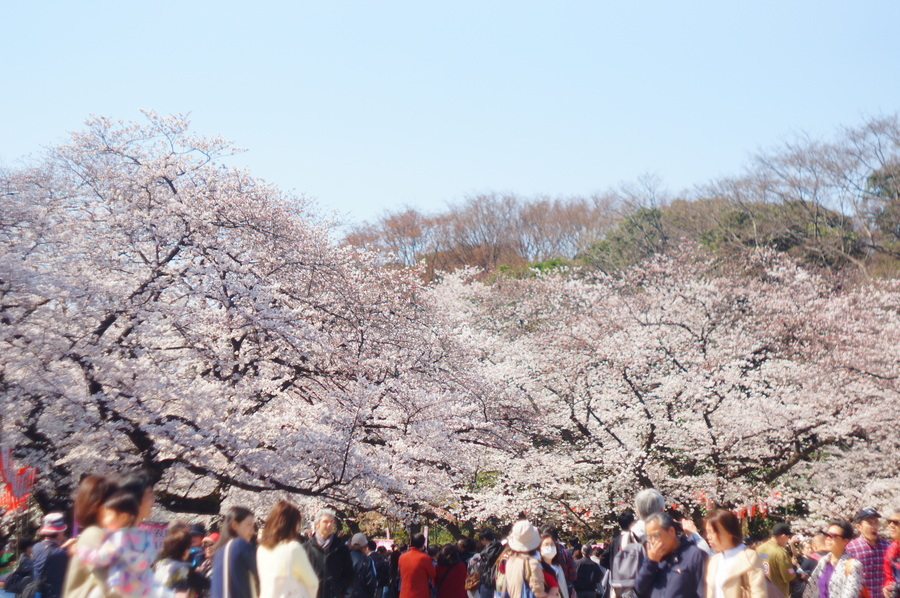 上野から郡山へ_c0180686_19014480.jpg