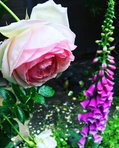 古民家の庭にて。 〜バラの季節がはじまりました。〜_d0077603_10260701.jpg