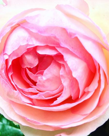古民家の庭にて。 〜バラの季節がはじまりました。〜_d0077603_10261516.jpg