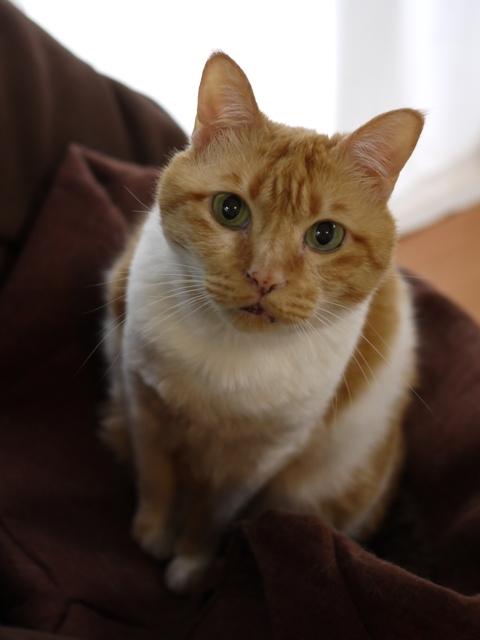 猫のお留守番 喜助くん編。_a0143140_21485751.jpg