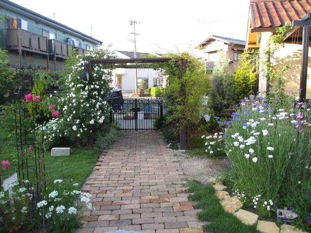 「スノーグース」が庭入り口アーチで見頃になりました_a0243064_16455921.jpg