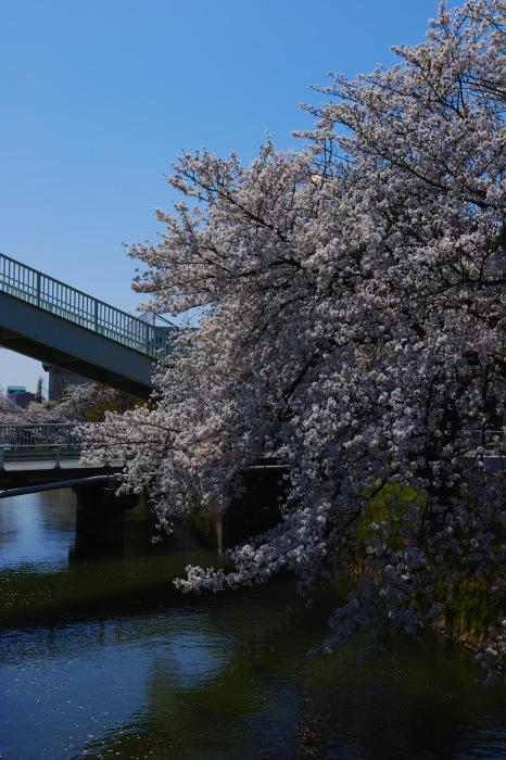 桜2018ご近所_f0021869_22085690.jpg