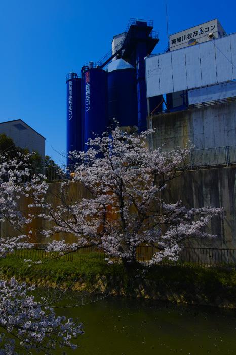 桜2018ご近所_f0021869_22093737.jpg