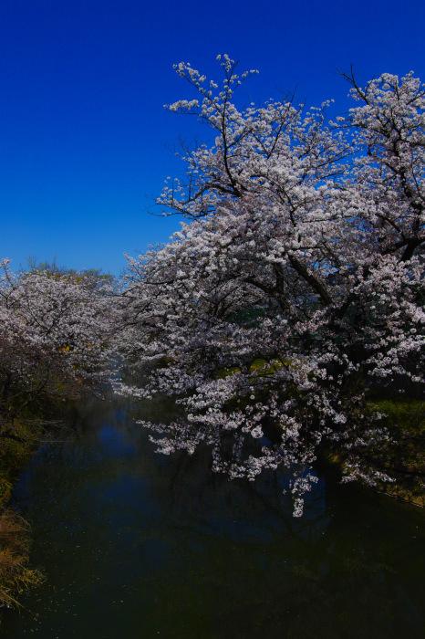 桜2018ご近所_f0021869_22095233.jpg