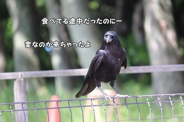 b0111376_16581073.jpg
