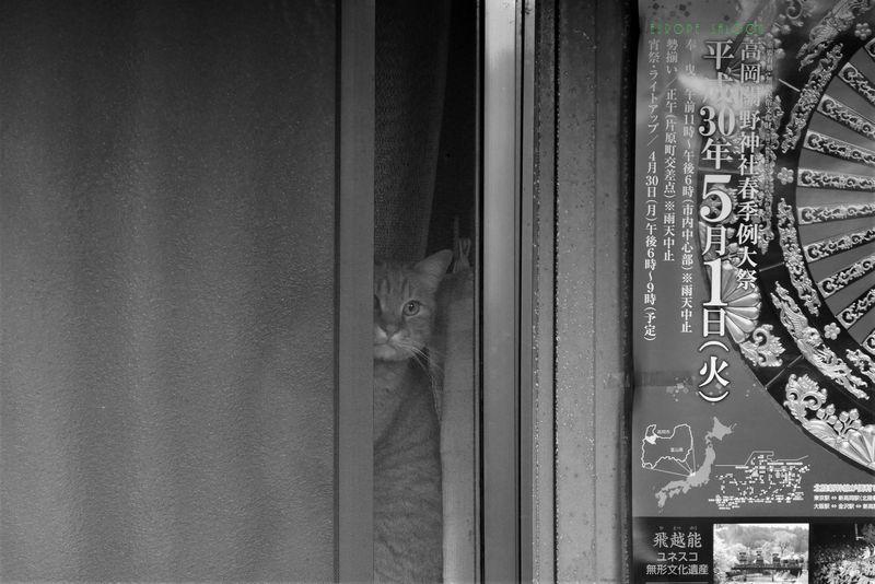 覗き猫_b0150077_10454928.jpg