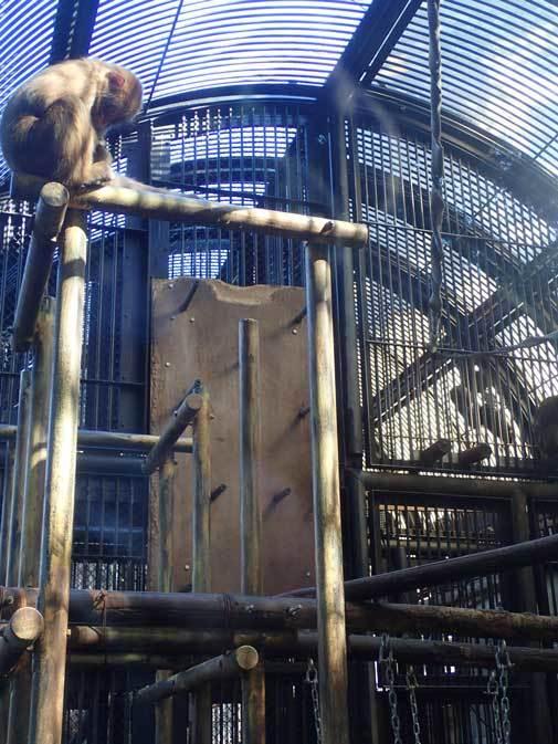 大宮公園小動物園の多彩な霊長類~ニホンザル、フサオマキザル_b0355317_22435087.jpg