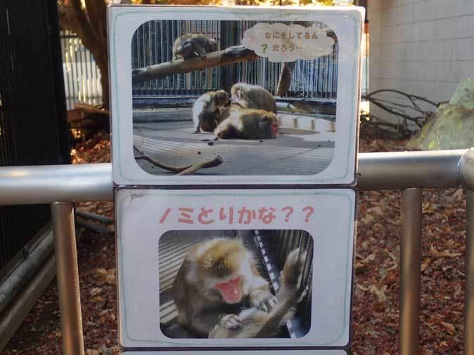 大宮公園小動物園の多彩な霊長類~ニホンザル、フサオマキザル_b0355317_22470839.jpg