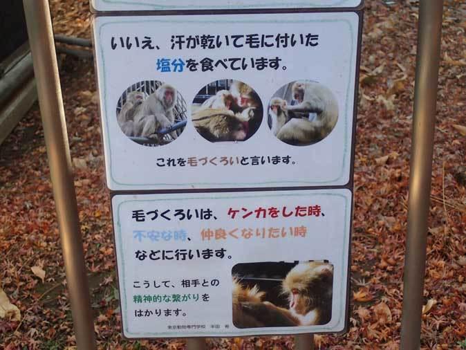 大宮公園小動物園の多彩な霊長類~ニホンザル、フサオマキザル_b0355317_22484504.jpg