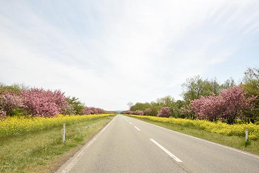 再び八郎潟線・2018桜…と、大潟村ドライヴ_b0259218_04415467.jpg