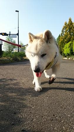GW前半 長野県への犬連れ車中泊の旅 道の駅オアシス小布施編_b0080342_10084928.jpg