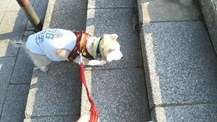 GW前半 長野県への犬連れ車中泊の旅 道の駅オアシス小布施編_b0080342_10101645.jpg