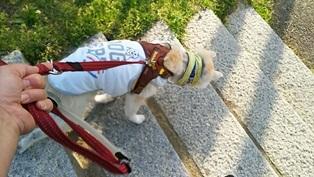 GW前半 長野県への犬連れ車中泊の旅 道の駅オアシス小布施編_b0080342_10111616.jpg
