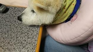 GW前半 長野県への犬連れ車中泊の旅 道の駅オアシス小布施編_b0080342_10121468.jpg