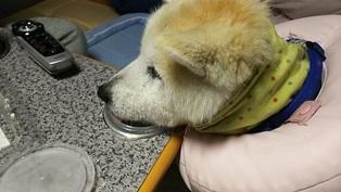 GW前半 長野県への犬連れ車中泊の旅 道の駅オアシス小布施編_b0080342_10132047.jpg