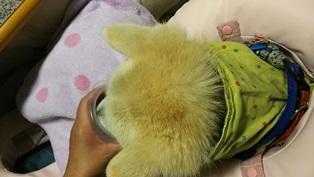 GW前半 長野県への犬連れ車中泊の旅 道の駅オアシス小布施編_b0080342_10133346.jpg