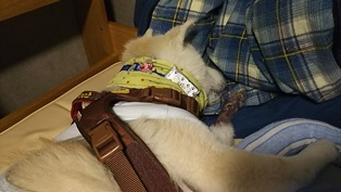 GW前半 長野県への犬連れ車中泊の旅 道の駅オアシス小布施編_b0080342_10181374.jpg