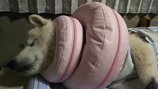 GW前半 長野県への犬連れ車中泊の旅 道の駅オアシス小布施編_b0080342_10220473.jpg