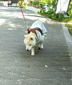 GW前半 長野県への犬連れ車中泊の旅 善光寺編_b0080342_10582579.jpg