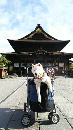 GW前半 長野県への犬連れ車中泊の旅 善光寺編_b0080342_11015862.jpg
