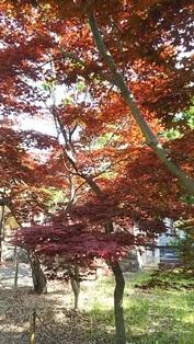 GW前半 長野県への犬連れ車中泊の旅 善光寺編_b0080342_11040828.jpg