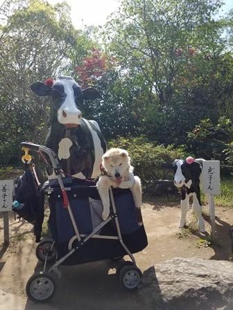 GW前半 長野県への犬連れ車中泊の旅 善光寺編_b0080342_11050370.jpg