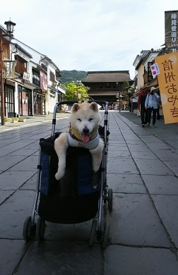 GW前半 長野県への犬連れ車中泊の旅 善光寺編_b0080342_11333921.jpg