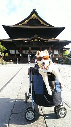 GW前半 長野県への犬連れ車中泊の旅 善光寺編_b0080342_11340911.jpg